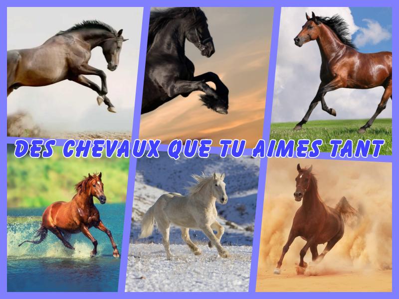 Des chevaux que tu aimes tant